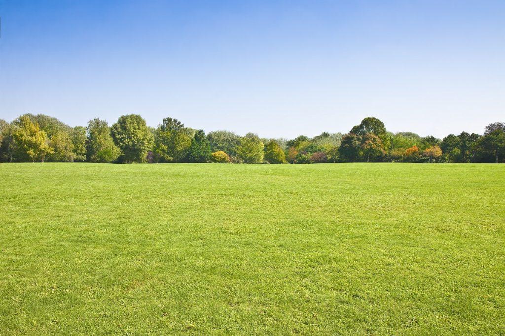 Open field park
