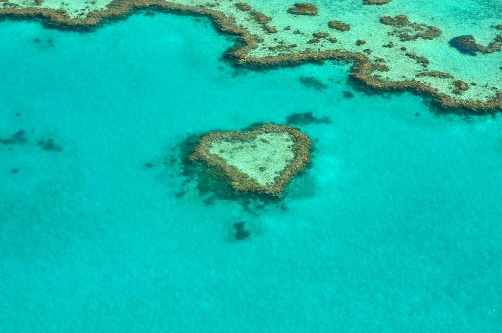 Heart coral australia